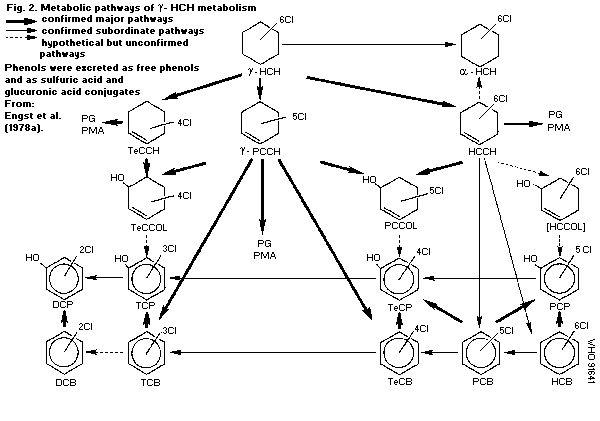 Bioassay of Lindane (Gamalin 20) to Hetrobrancus