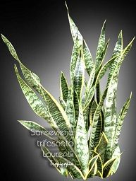 Get a snake plant for your office desk or workspace. They're the best filter for indoor pollution – and can grow perfectly well under florescent lights.