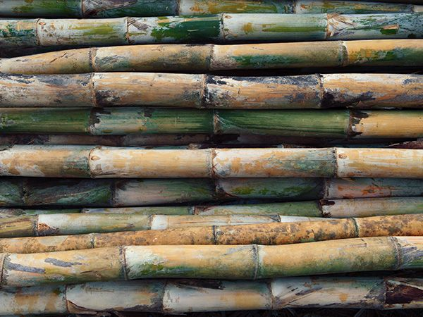 Characteristics of Bamboo | URBANARA UK