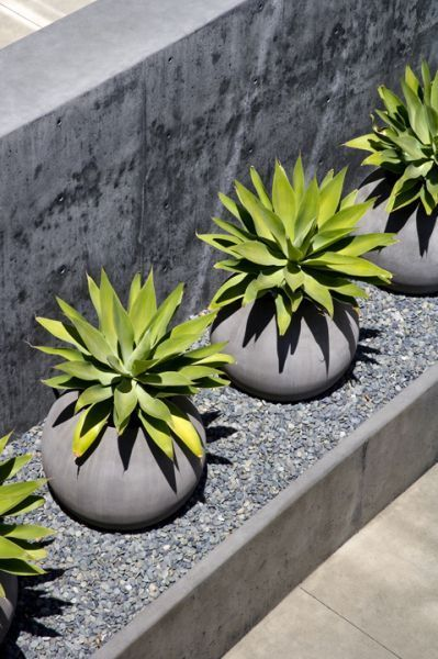 Agaves in Concrete Pots at Perimeter Wall