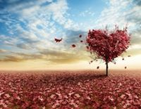 Have you ever truly madly fallen in love? I did. What does it mean to fall in love, or be in love, or even stay in love? In Buddhism, striving for that which is outside of our true nature is seen as