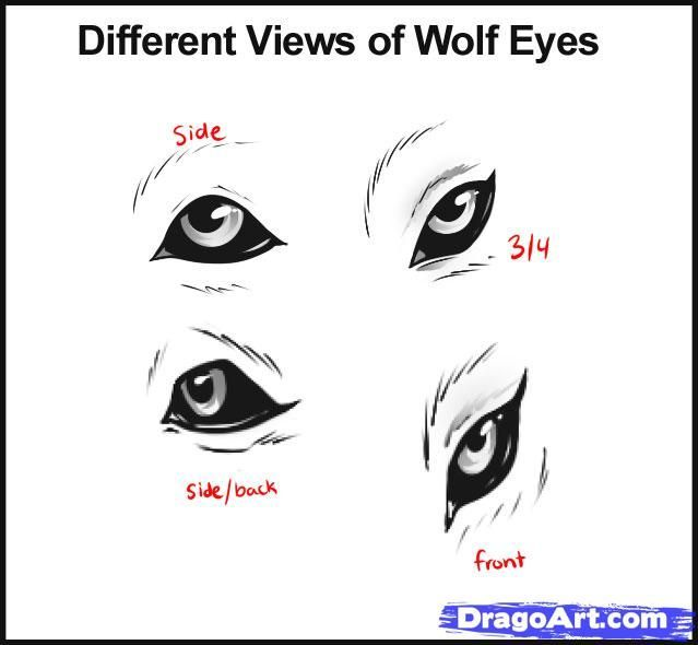how to draw wolves - Google Search
