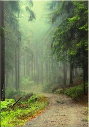 Enchanted Forest - Michelbach, Germany by Hercio Dias