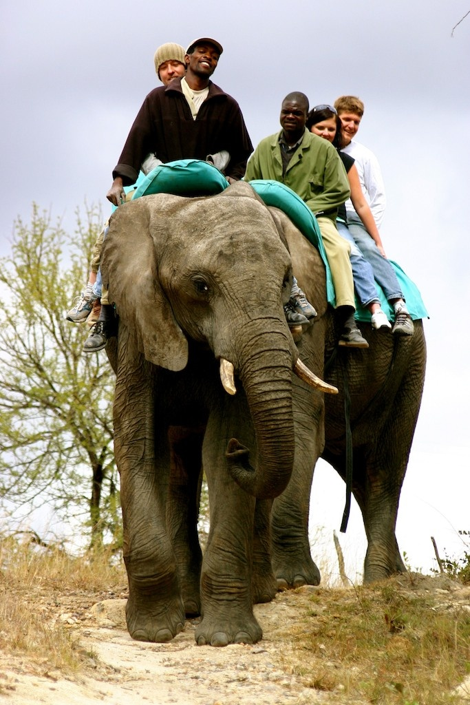 Enjoy a relaxing and exciting elephant ride. A great way to see the surroundings in Antelope Park!
