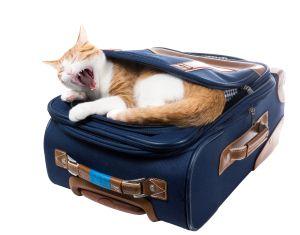 Viajar con gatos La transportadora para gatos forma par…