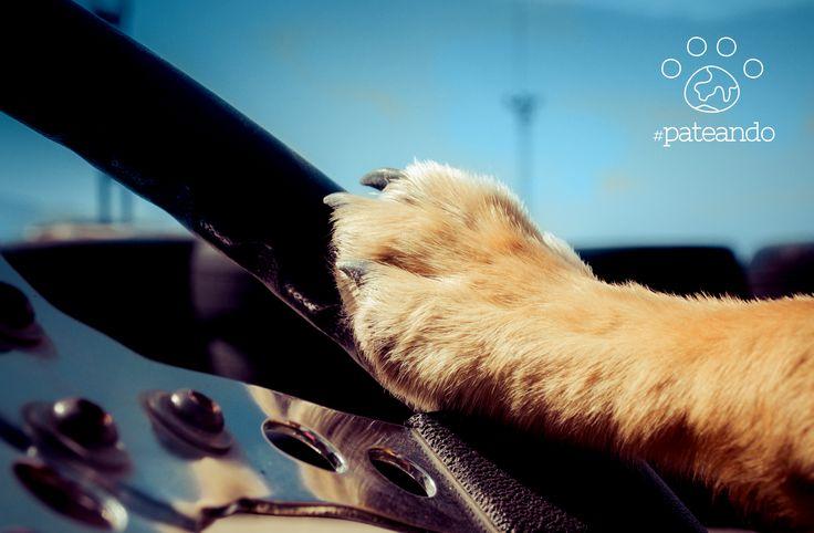 Montar en el kart y #patear el circuito de #kartpetania es un auténtico subidón de adrenalina. Solo para humanos!