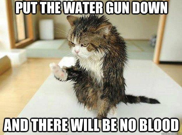 Don't trust an angry kitty. There may not be blood, but there will be pain.....