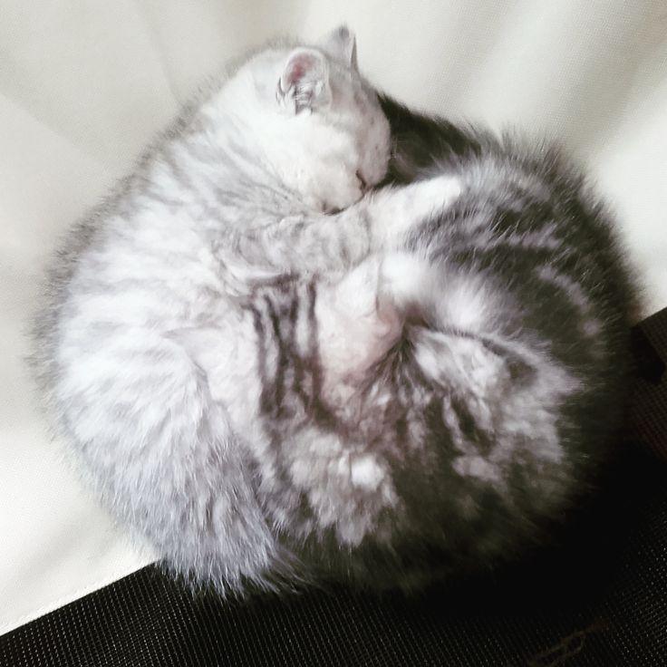 The kittens like to cuddle http://ift.tt/2qUhIeM