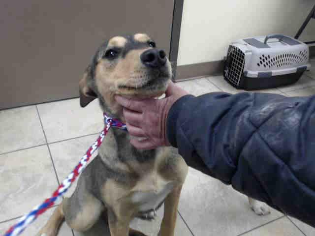 Labrador Retriever Dog For Adoption In Houston Tx Adn 753324 On Puppyfinder Com Gender Female Age Y Labrador Retriever Labrador Retriever Dog Dog Adoption