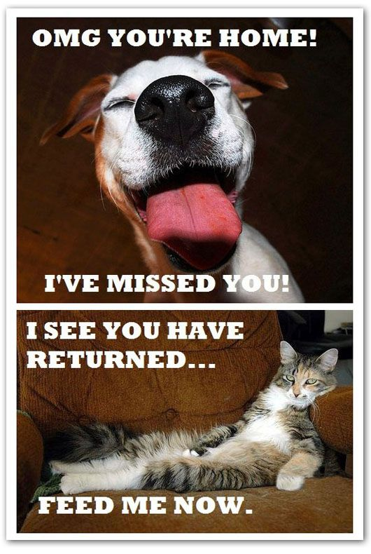 The difference between dogs and cats: Dogs And Cats, Pet, Dogs Cat, Truths, I Love Cat, Funny Stuff, Dogs Rules, I Love Dogs, Hate Cat