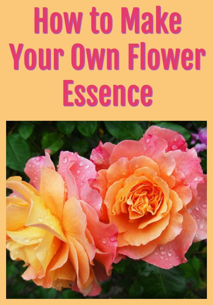 How To Make Your Own Flower Essence Https Ilikeitfrantic Net How To Make Your Own Flower Essence Flower Essence Flower Essences Flower Therapy Flower Remedy