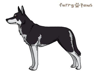 Furry Paws // UCH Kip's Thunder Ace [3STM 1.592] *BoB*x7's Kennel