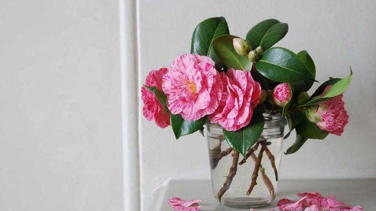 Making Arrangements: Captivating Camellias