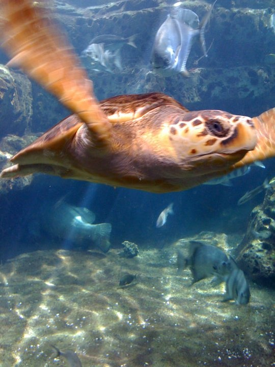 29 best zoos and aquariums images on pinterest georgia for Georgia freshwater fish