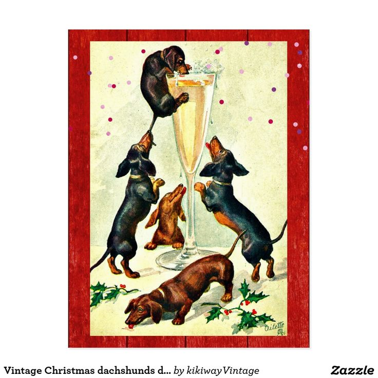 Vintage Christmas dachshunds drink champagne