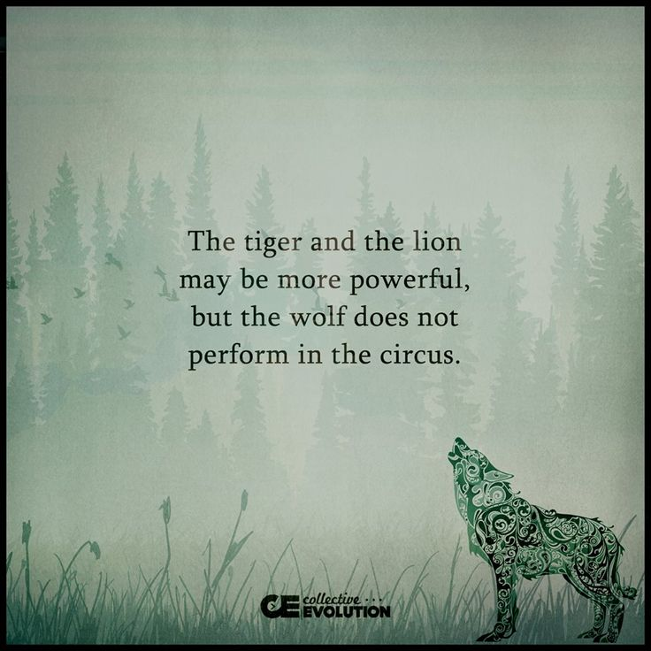 The tiger and the lion may be more powerful, but the wolf does not perform in the circus.