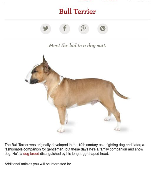 Http Dogtime Com Dog Breeds Staffordshire Bull Terrier