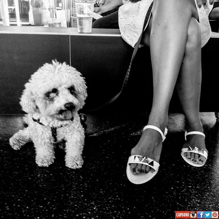 DOG and LEGS by Capsoni >Inst-Fb-Tw-Pint