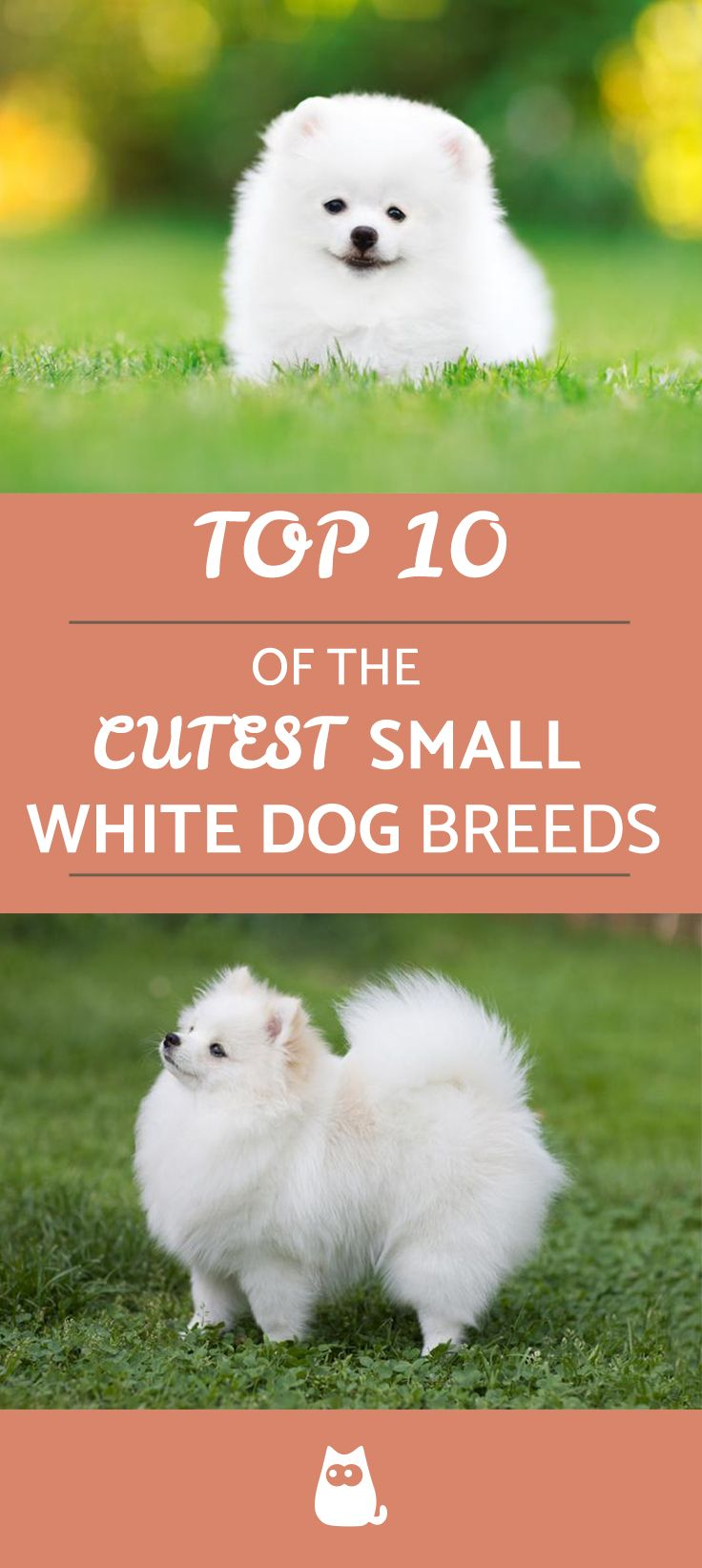 Small White Dog Breeds Top 10 With Pictures White Dog Breeds Dog Breeds White Dogs