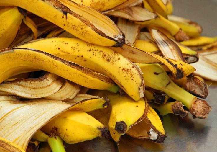 Bananenschalen sind eigentlich viel zu schade für die Biotonne. Wenn man sie richtig präpariert, ergeben sie einen hervorragenden Dünger für Rosen und Zimmerpflanzen.
