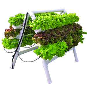 I'd also like to try my hand at organic hydroponic garden systems.