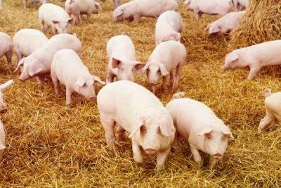 Care sunt documentele necesare privind subvențiile pentru creșterea animalelor http://www.antenasatelor.ro/cre%C5%9Fterea-animalelor/8082-care-sunt-documentele-necesare-privind-subven%C8%9Biile-pentru-cre%C8%99terea-animalelor.html