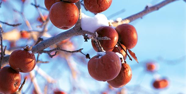 my favorite wine of all - Neige Apple Ice Wine  http://appleicewine.com/index_en.html