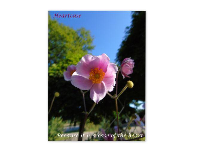 Vraag gratis het dankbaarheid dagboek aan. stuur een mail naar info@heartcase.nl
