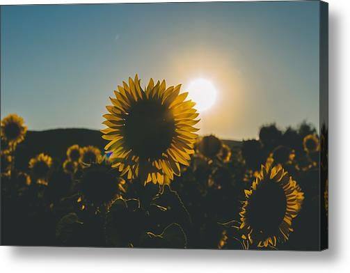 Definition Of Summer Acrylic Print By Cesare Bargiggia