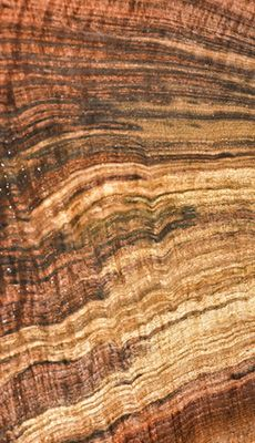 This Black Walnut log has unreal color and amazing curly figure - perfect for gun stocks or guitar sets!!  Hearne Hardwoods Inc.