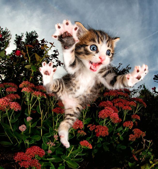 Photographer Seth Casteel casts his lens on the priceless expressions of rescue cats and kittens bounding and jumping through the air.