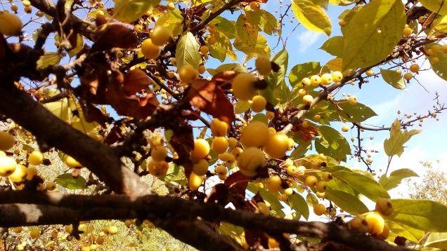 Az ősz csodálatos évszak.  Az idő, amikor még utoljára mindent elönt a természet szépsége. Mintha a természet megmentett volna nekünk egy finálét. - Micsoda türelme van az őszi virágoknak. A napok megrövidültek, az ásítozó lustasággal cikázást mímelő rovarok fütyülnek az októberi virágzásra, de a kert még egyszer megmutatja utolsó szépségeit.  - Ma az októberi lágy napfény az egész kertet sütkérezésre ingerlő meleg fénnyel borította be… (Németh György)