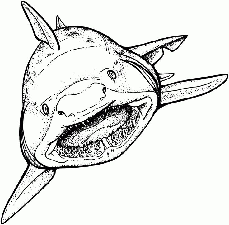 coloring pages shark - Coloring Pages Of Sharks