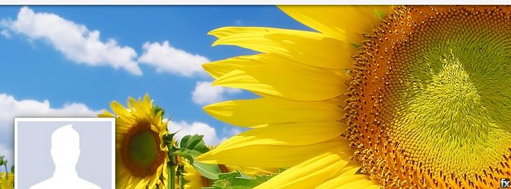 Facebook Cover Photo Giant Yellow Sunflowers