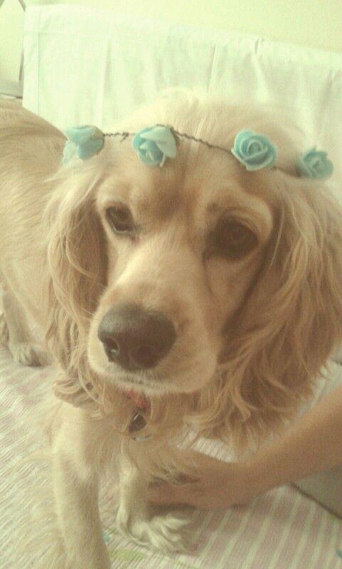 Best model :)