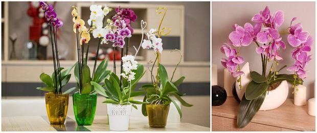 Storczyki Wymagaja Odpowiedniej Pielegnacji Plants Glass Vase Decor
