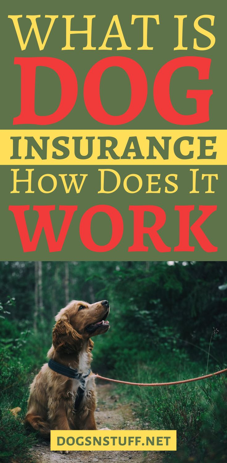 How to find the best dog insurance dog insurance puppy