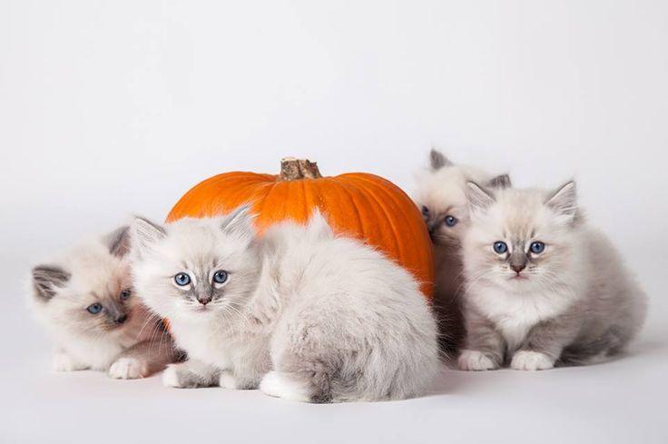 Mici in posa per Halloween allo Spazio Cam