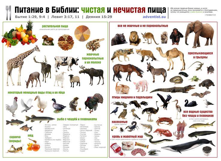 Плакат, схема, Библия о пище, еда в Писании, чистые и нечистые животные, кошерная пища, инфографика. Чистая и нечисая пища.