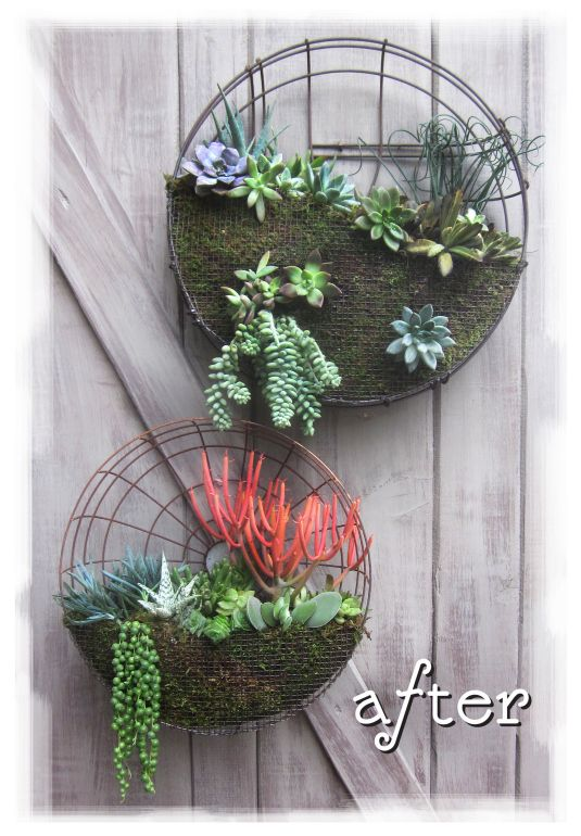Another vertical garden idea for me to try...oldfan gaurds fab