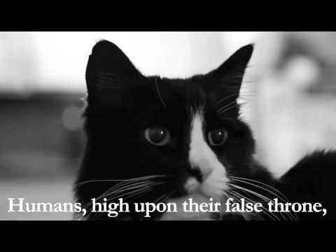 Henri The Cat hat eine gründliche Studie über Katzenfutter-Langeweile durchgeführt und möchte seine wichtigsten Erkenntnisse mitteilen
