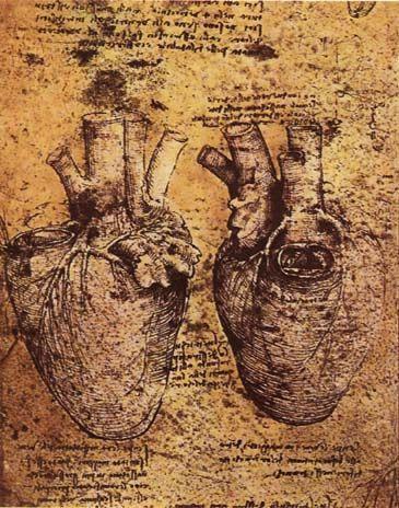 Atelier Rodolfo Carvalho: O Desenho de Leonardo Da Vinci