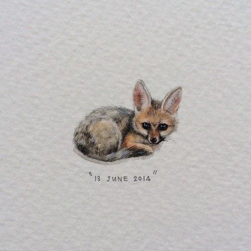 Day 164 : Cape Fox | Silver-backed Fox | Vulpes Chama. 19 x...//postcards for ants