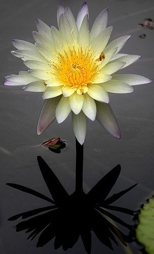 dress online Waterlily beauty of nature  Beautiful and Aimless
