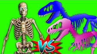 Skeleton Vs Dino Colors Skeleton Finger Family Collection|Finger Family Nursery Rhyme&songs For Kids - YouTube