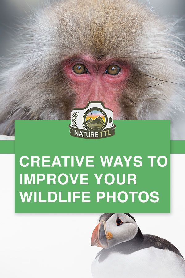 9 Creative Ways To Drastically Improve Your Wildlife Photos Wildlife Photography Tips Wildlife Photography Animal Photography