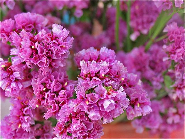 (4G) amarandos φουξια-ροζ