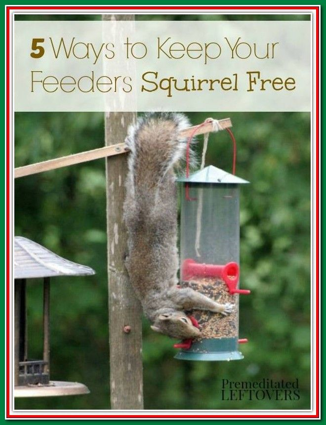 How To Get Rid Of Squirrels At The Bird Feeder