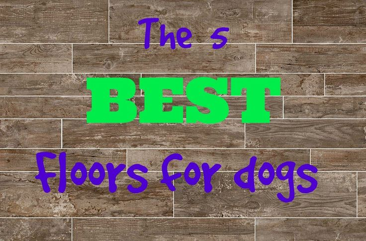 25 best best flooring trending ideas on pinterest best for Dog friendly flooring ideas