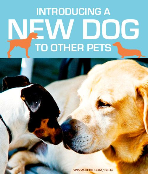 Introducing a New Dog to Other Pets - Rent.com Blog  #dog #pets